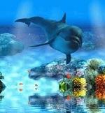 Dolphin93