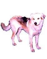cachorro222
