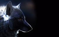 الذئب الهارب