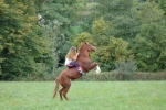 love hors