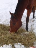 horse.jenny