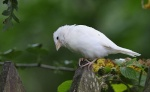 الطائر الحزين