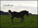 Cochise29
