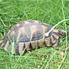 snail87