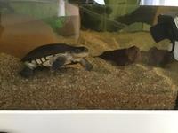 Mac Turtle