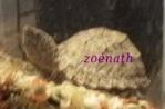 zoénath