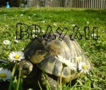 Brayan The Turtle