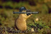 Marmotte66