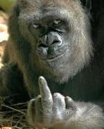 Toy el Mono..!!!