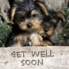 Doggy Get Well