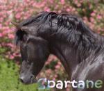 Spartane