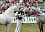Showhorse401