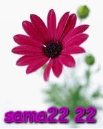 22 sama22