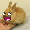 Bunny Awesome