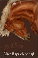 Coocky