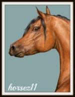 horsez11