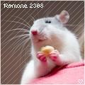 Romane 2308