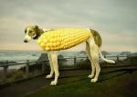 corndog472