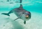 gmpdelfin
