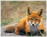Foxycleopatra