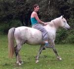 refuge l'arche aux poneys
