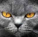 revenge of the cat