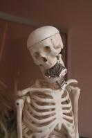 skeleton31