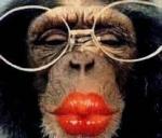 Mãe do macaco
