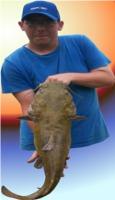 catfish willy