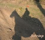 Schrimp