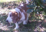 houndmom