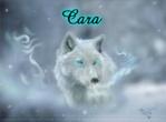 Cara1234