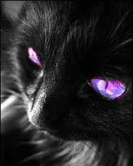 Et une fois que le virus est « réveillé », le pronostic est malheureusement sombre pour le chat à court ou moyen.