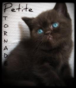 Petite Tornade