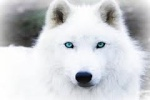Snowstar