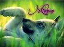 Miapup