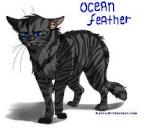 Oceanfeather