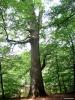 Tronc d'arbre.
