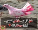 كادر المعــلم ( أسئلـة واختبـــــارات ) 1-52
