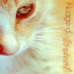 Nuage d'Abricot