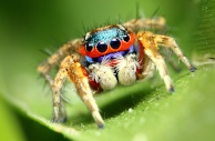 Arachna