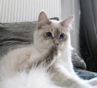 Monde-des-chats