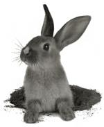 x-black-bunny-x