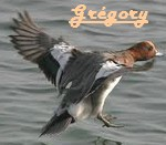 grego33