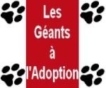 Les Géants à l'Adoption