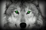 Green-Wolf
