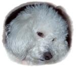 El Cielo de los Poodles 228-54