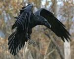 Воронааа