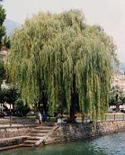 cinzia tomassini