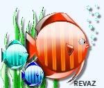 revaz57